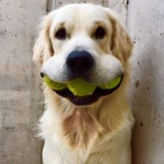 Cleaning With Pets, How to Clean With Pets, Cleaning Tips and Tricks, Keeping Your House Clean With Pets, Home Cleaning Hacks, How to Keep Your Home Clean, Clutter Free Home, How to Get Rid of Pet Smell, How to Get Rid of Pet Hair
