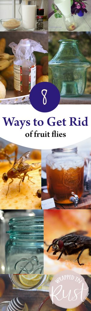 8 Ways to Get Rid of Fruit Flies| How to Get Rid of Fruit Flies, Get Rid of Fruit Flies, How to Get Rid of Fruit Flies, Pest Control, Home Pest Control, How to Get Rid of Fruit Flies in YOur Home