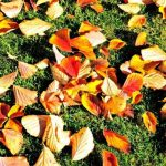 The Easy Way to Clear Your Yard of Leaves| Fall Leaves, How to Clean Fall Leaves, Fast Ways to Clean Fall Leaves, Clean Up Fall Leaves, Landscaping Hacks, Home Landscaping Tips and Tricks