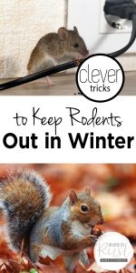 Rodents | Tips and Tricks to Keep Rodents Out | Learn How to Keep Rodents Out | Rodent Control | Pest Control | Pest Control Hacks | Pest Control Tips and Tricks